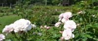 Sonnenberg Gardens Tour