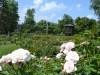 sonnenberg-rose-garden